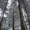 Randonnées en Auvergne paysages montagne campagne auvergne animaux